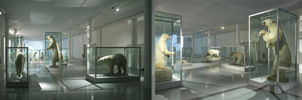 A Survey of British Taxidermic Polar Bears